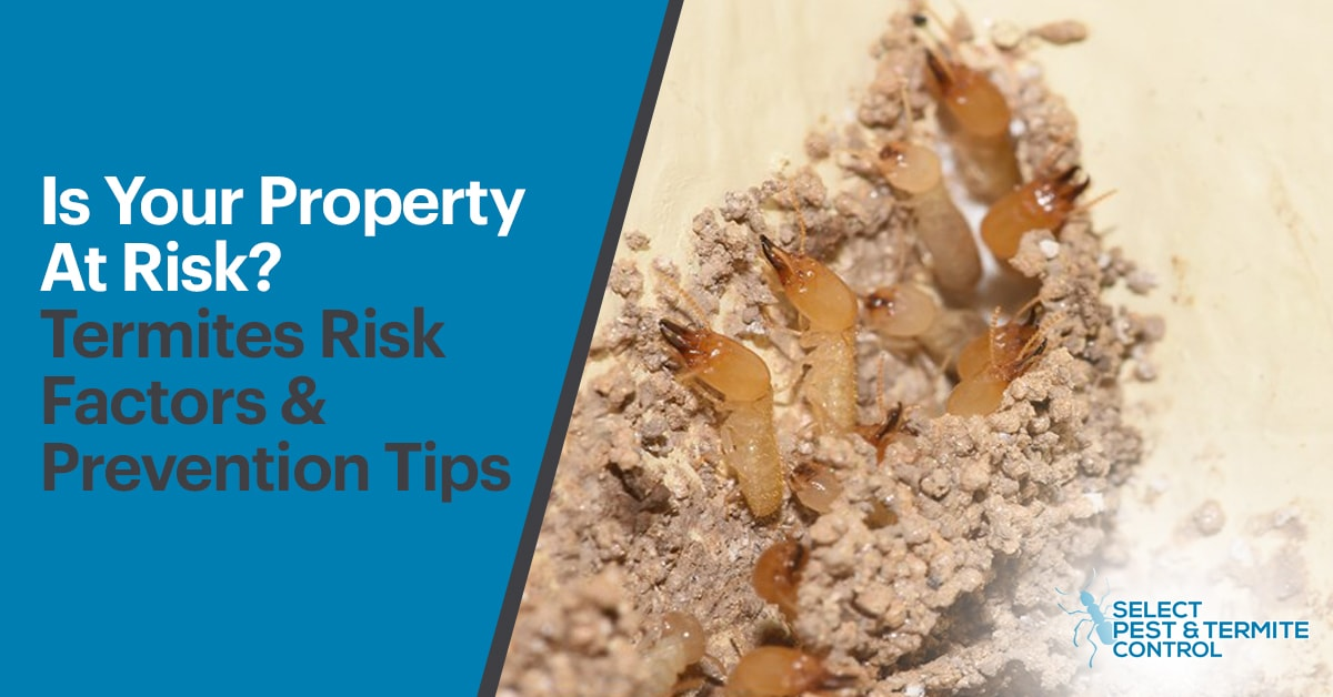 Termites Risk Factors and Prevention Tips