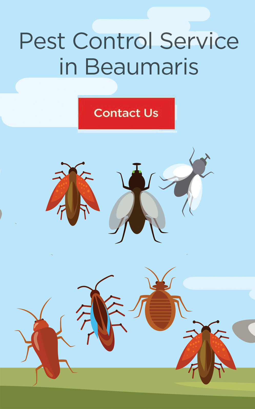 Pest & Termite Control Services beaumaris