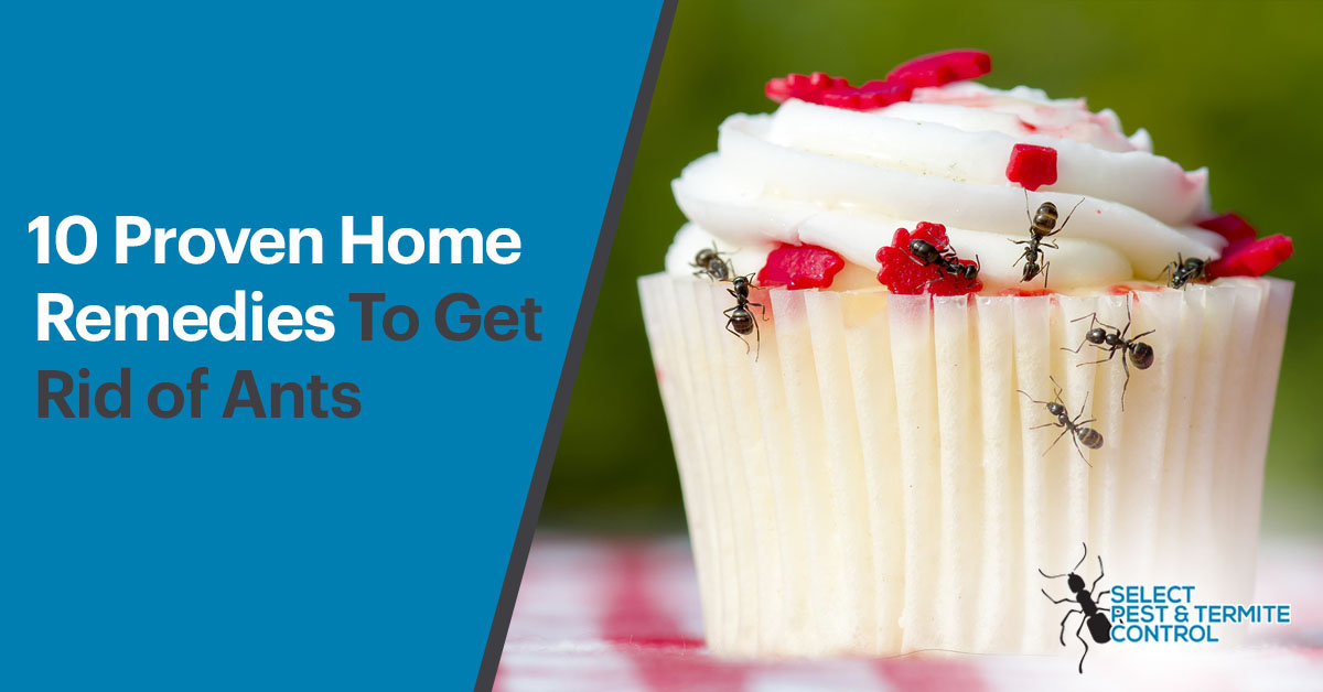 Proven Natural Home Remedies To Get Rid Of Ants