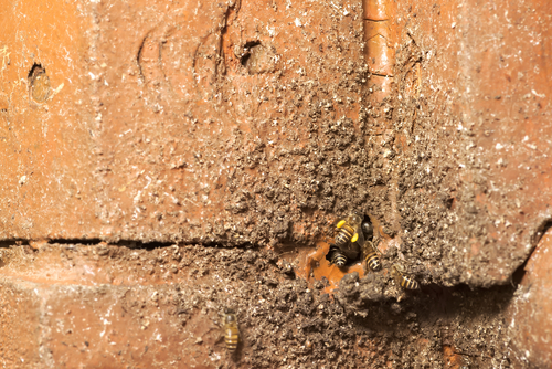 professional bee control in melbourne
