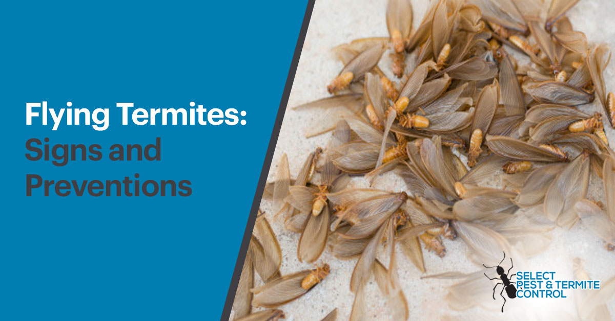 Flying Termites: Signs And Preventions